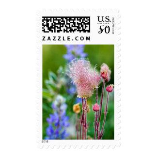 Prairie Smoke Wildflowers In Aspen Grove 2 Postage