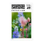 Prairie Smoke Wildflowers In Aspen Grove 2 Postage Stamp