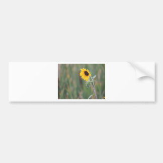 Prairie Sunflower Car Bumper Sticker