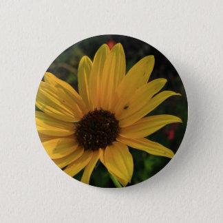 Prairie Sunflower Button
