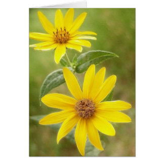 Prairie Sunflower - Helianthus maximilianii Card