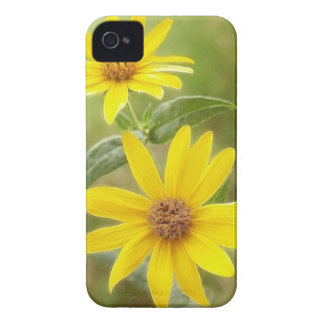 Prairie Sunflower - Helianthus maximilianii Case-Mate iPhone 4 Case