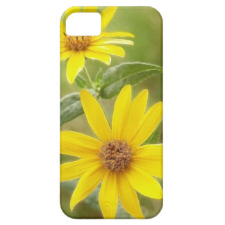 Prairie Sunflower - Helianthus maximilianii iPhone SE/5/5s Case