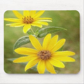 Prairie Sunflower - Helianthus maximilianii Mouse Pads