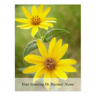Prairie Sunflower - Helianthus maximilianii Postcard