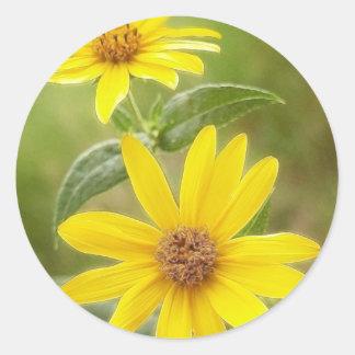 Prairie Sunflower - Helianthus maximilianii Classic Round Sticker