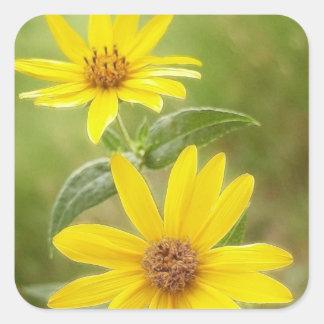 Prairie Sunflower - Helianthus maximilianii Square Sticker