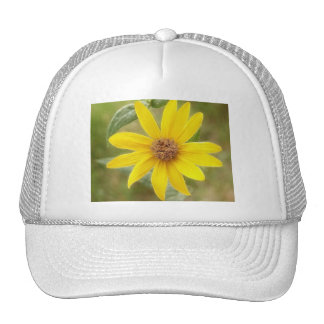 Prairie Sunflower - Helianthus maximilianii Trucker Hat