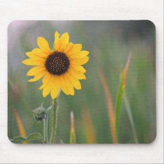 Prairie Sunflower Mousepads