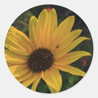 Prairie Sunflower Classic Round Sticker