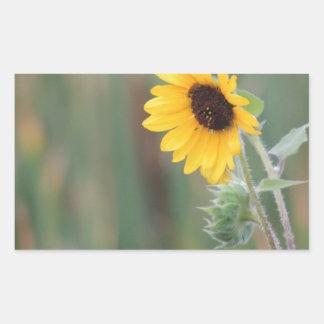 Prairie Sunflower Rectangular Sticker