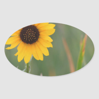 Prairie Sunflower Oval Sticker