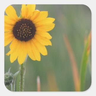 Prairie Sunflower Square Sticker