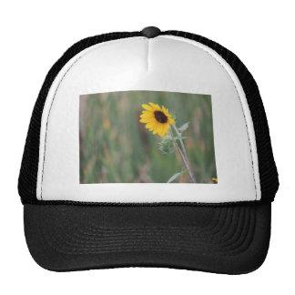 Prairie Sunflower Trucker Hat