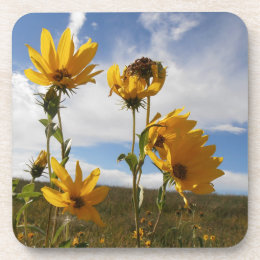 Prairie Sunset Coaster