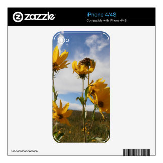 Prairie Sunset Decal For iPhone 4