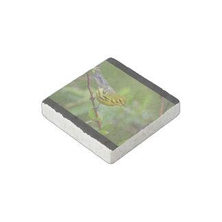 prairie warbler stone magnet