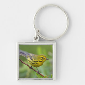 prairie warbler Silver-Colored square keychain