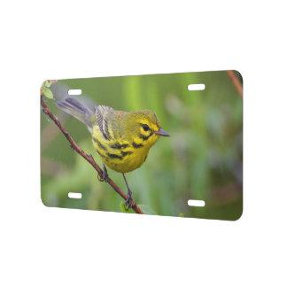 prairie warbler license plate