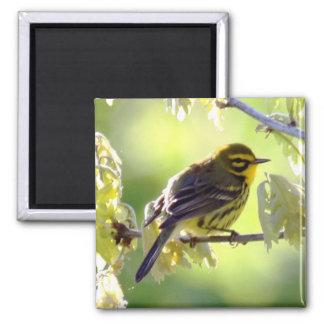 Prairie Warbler Magnet