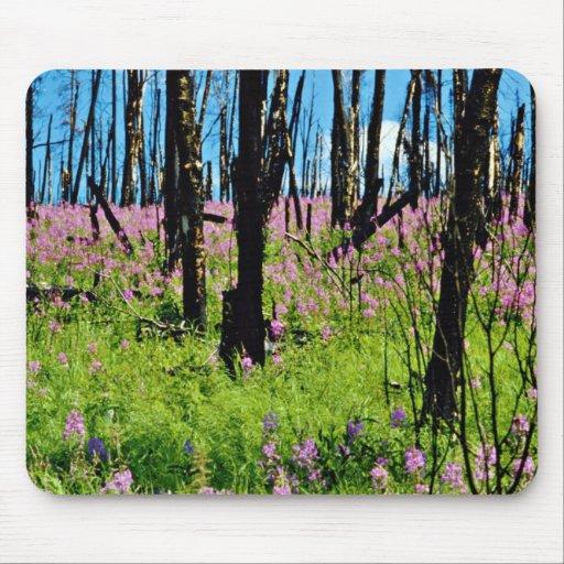 Prairie wildflower, fireweed growing in forest bur mouse pad