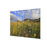 Prairie Wildflowers at Windy Creek in the Many Canvas Print