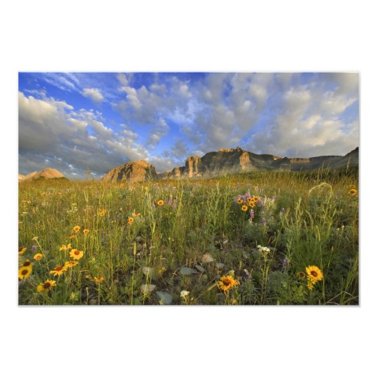 Prairie Wildflowers at Windy Creek in the Many Photo Print