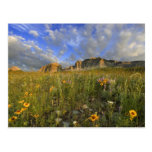 Prairie Wildflowers at Windy Creek in the Many Postcard