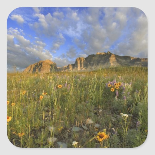 Prairie Wildflowers at Windy Creek in the Many Square Sticker