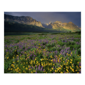 Prairie wildflowers fill meadow near Lake Poster