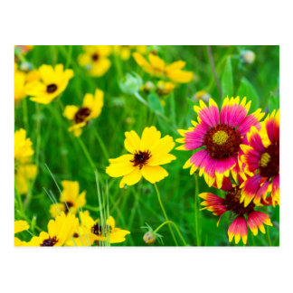 Prairie wildflowers in Hill Country Postcard