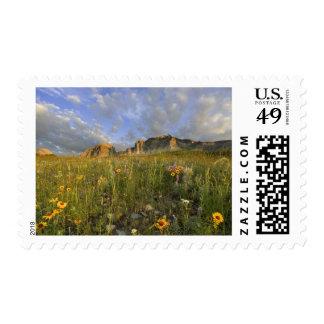 Prairie Wildflowers in Many Glacier Valley at Postage