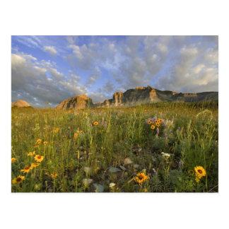 Prairie Wildflowers in Many Glacier Valley at Postcard