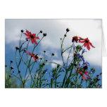 Prairie Wildflowers Note Card