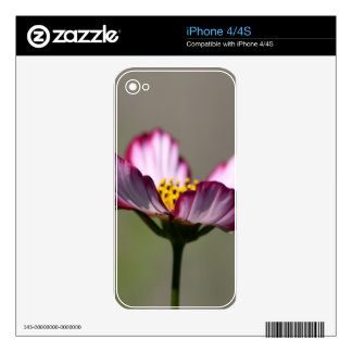 Praise Him Flower Decal For The iPhone 4