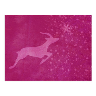 Prancer the Star Post Card