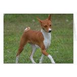Prancing Basenji Dog Card