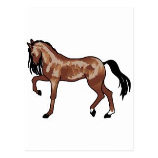 Prancing Horse Smaller Postcard