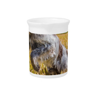 Prancing Italian Spinone Beverage Pitcher