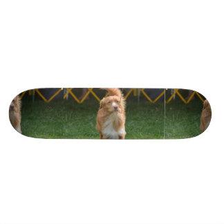 Prancing Nova Scotia Retriever Skate Board Deck