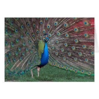 Prancing Peacock Card