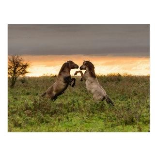 Prancing wild horses postcard