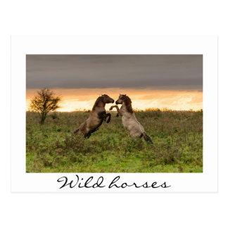 Prancing wild horses white text postcard