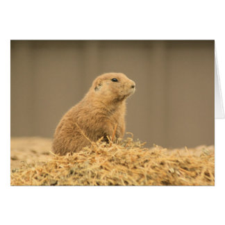 Prarie Dog Ain't I Cute Card