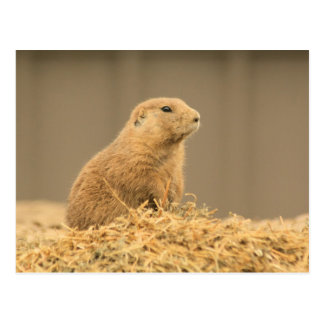 Prarie Dog Ain't I Cute Postcard