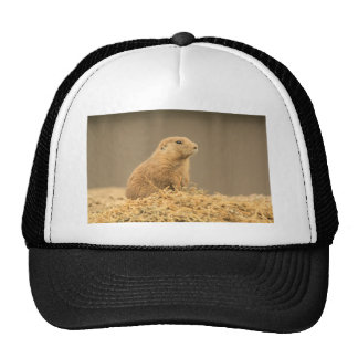 Prarie Dog Ain't I Cute Trucker Hat