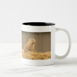 Prarie Dog Ain't I Cute Two-Tone Coffee Mug