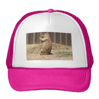 Prarie Dog Eating Grass Hat