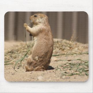 Prarie Dog Eating Grass Mousepad