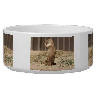 Prarie Dog Eating Grass Pet Bowl
